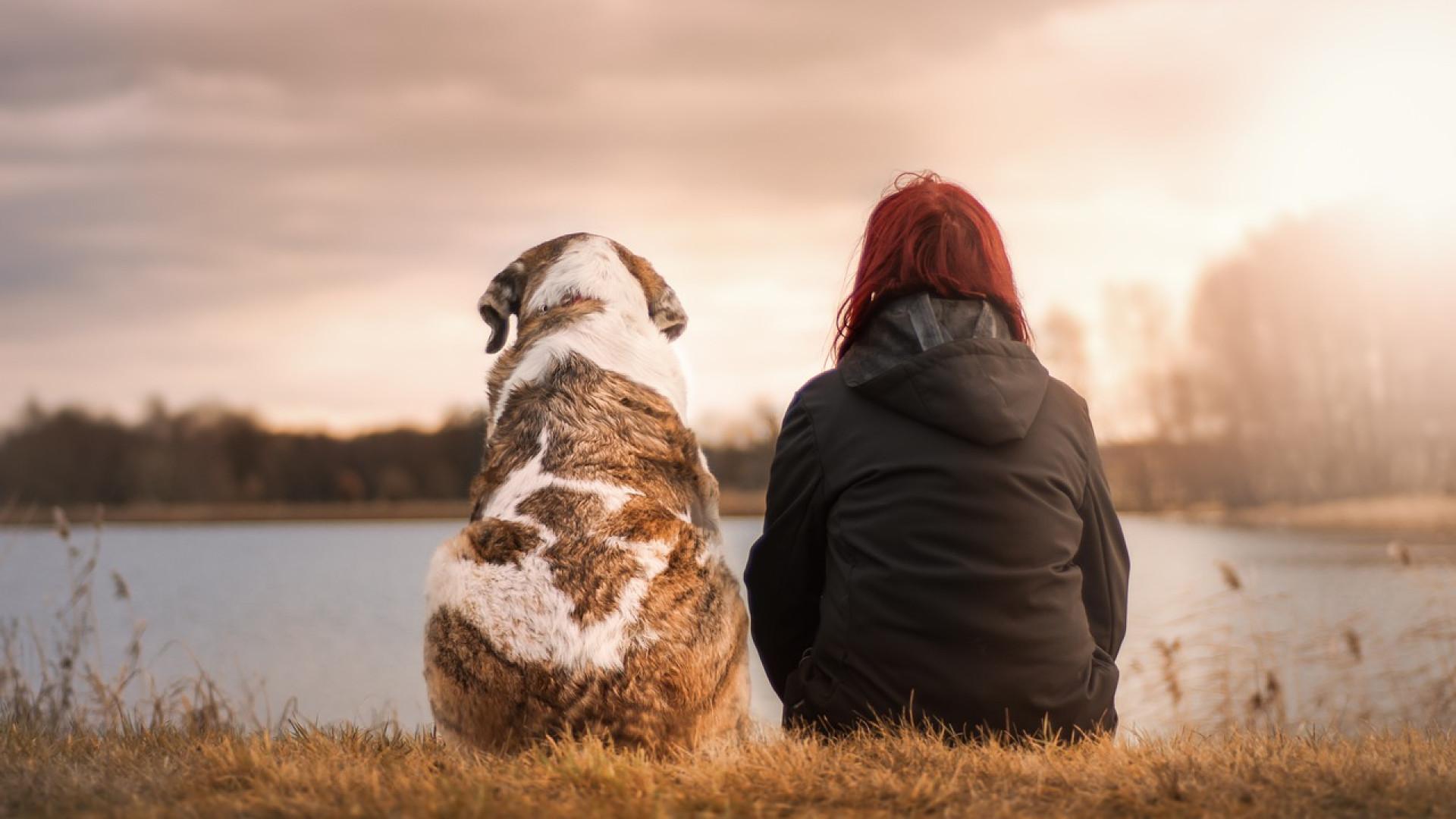 Adoptez la meilleure alimentation pour votre chien